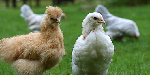Zubehör Hühnerstall