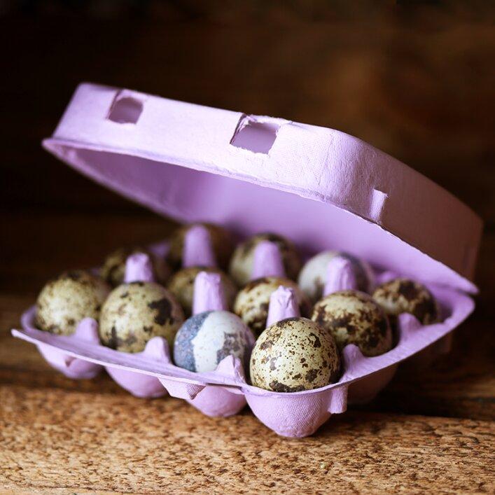 12er Wachteleierschachtel Pappe - Lavender