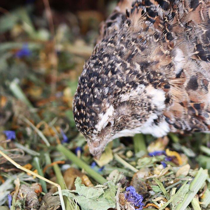HappyPick Kräuter | Lavendel & Baldrian 300g